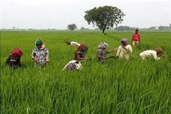 जीडीपी में कृषि की हिस्सेदारी बढ़ाने में कृषि अवसंरचना कोष अहम होगा - किसान निकाय